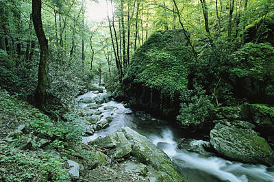 View Of Roaring Fork Creek Art Print by George F. Mobley
