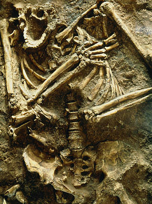 View Of The Skeleton Of A Neanderthal Art Print by Volker Stegernordstar - 4 Million Years Of Man