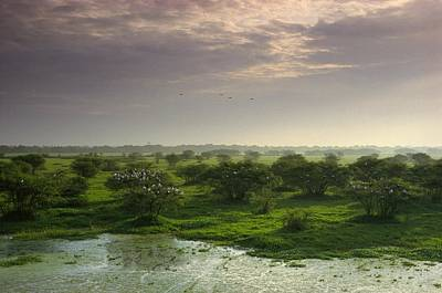 View Of Wetland Landscape With Openbill Art Print