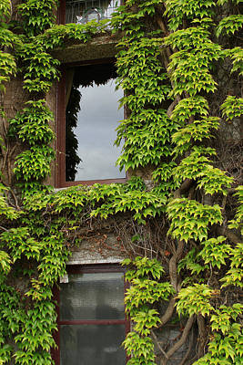 Photograph - Vine Covered Window by Ronald Olivier