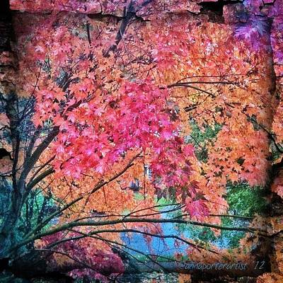 Apple Wall Art - Photograph - Vine Maple - Fall Color by Anna Porter