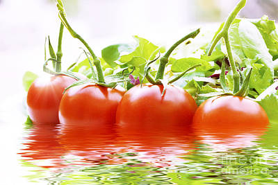 Vine Tomatoes And Salad With Water Art Print by Simon Bratt Photography LRPS