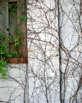 Photograph - Vined Wall by Lizi Beard-Ward