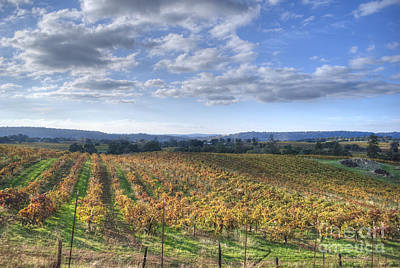 Amador County Photograph - Vines In Fields by Diego Re