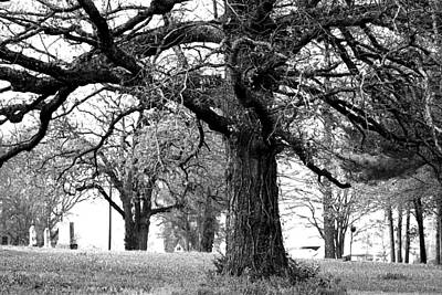Photograph - Viney Trees by Marie Jamieson
