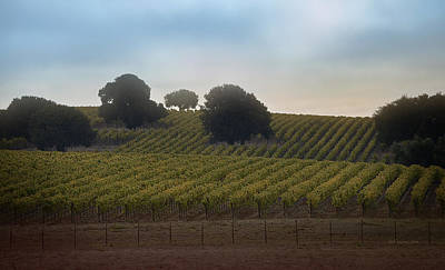 Photograph - Vineyard 37 by Xueling Zou