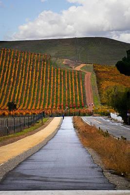 Pastoral Vineyards Digital Art - Vineyard After The Rain by Karen  W Meyer