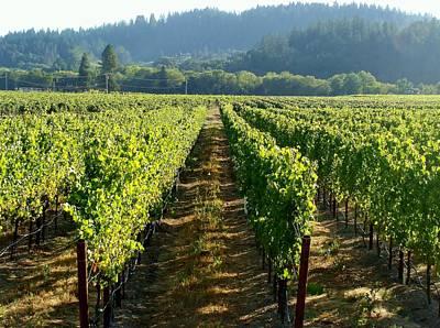 Napa Valley Vineyard Painting - Vineyard At Harvest by Kathleen Fitzpatrick