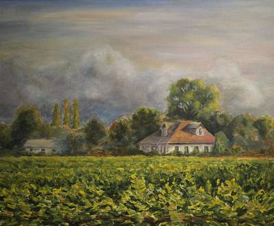 Vineyard Fog Santa Rosa Art Print