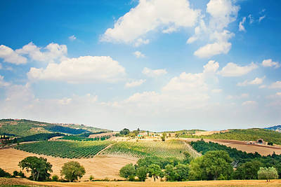 Y120831 Photograph - Vineyard by Just a click