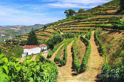 Vineyard Landscape Art Print by Carlos Caetano