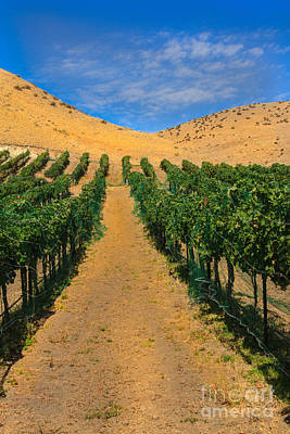 Vineyard Art Print by Robert Bales