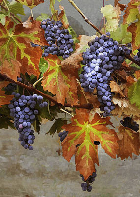 Purple Grapes Digital Art - Vineyard Splendor by Sharon Foster
