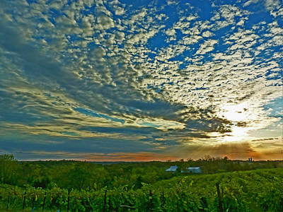 Art Print featuring the photograph Vineyard Sunset I by William Fields