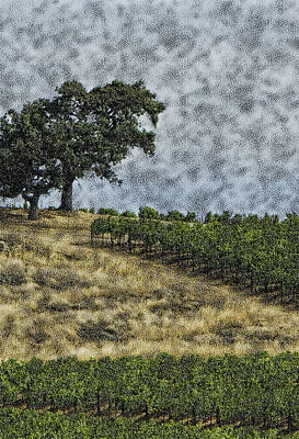 Stiff Photograph - Vineyard Tree by Gilbert Artiaga