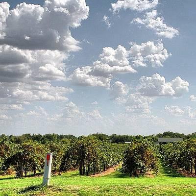Vineyard Photograph - #vineyard #vines #wine by James Dornan