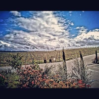 Vineyard Wall Art - Photograph - #vineyard #wine #winery #temecula by Skip Jensen