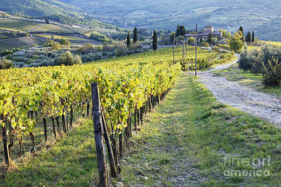 Chianti Vines Photograph - Vineyards And Farmhouse by Jeremy Woodhouse