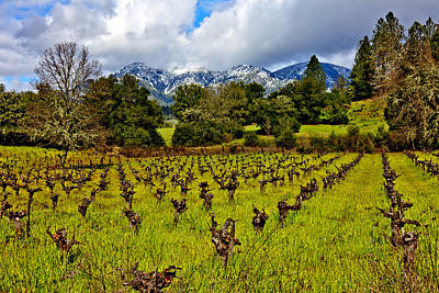 Vineyards And Mt St. Helena Art Print
