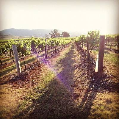 Vineyard Photograph - Vineyards Are So Magical ^^ by Vincy S