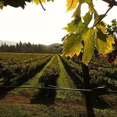 Vineyard Wall Art - Photograph - #vineyards At #sunset At by Crystal Peterson