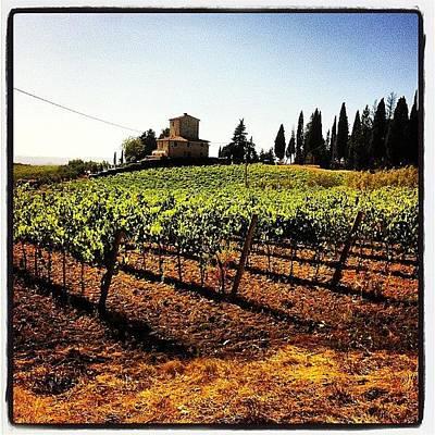 Vineyard Wall Art - Photograph - Vineyards by Fabrizio Morviducci