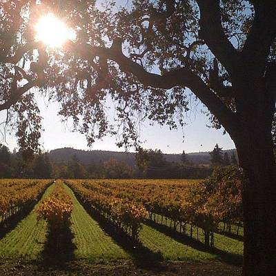 Vineyard Wall Art - Photograph - Vineyards In The Fall by Crystal Peterson