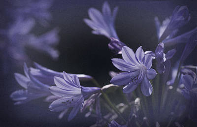 Blue Lily Of The Nile Photograph - Vintage Blue Storm by Richard Cummings