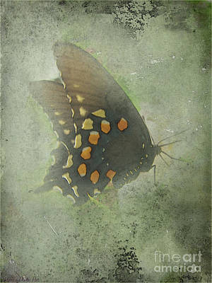 Photograph - Vintage Butterfly by Debbie Portwood