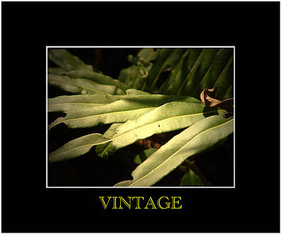Photograph - Vintage by David Weeks