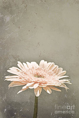 Photograph - Vintage In Pink by Traci Cottingham