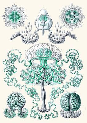 Vintage Jellyfish Art Print by Patruschka Hetterschij