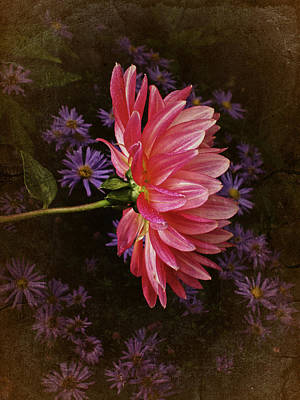 Vintage October Dahlia Print by Richard Cummings