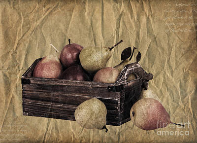 Vintage Pears Art Print by Jane Rix