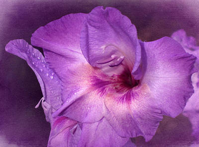 Vintage Purple Gladiola Art Print by Richard Cummings