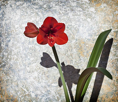 Photograph - Vintage Red Bloom by Al Hurley