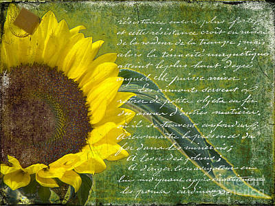 Tuscan Sunflowers Photograph - Vintage Sunflower by Karen Lewis