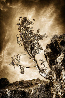Wild Weather - Vintage Tree by Svetlana Sewell