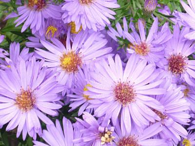 Violet Flowers Print by Pamela Turner