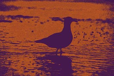 Galactic Alignment Photograph - Violet Gull Upon Sunset by Carolina Liechtenstein