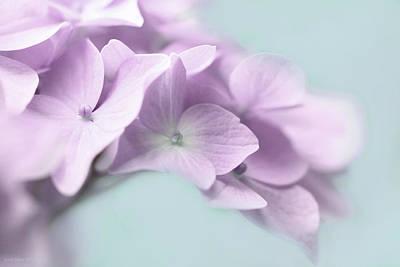 Purple Hydrangea Photograph - Violet Hydrangea Flower Macro by Jennie Marie Schell