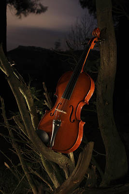 Hollywood Style - Violin in the forest by Fernando Alvarez