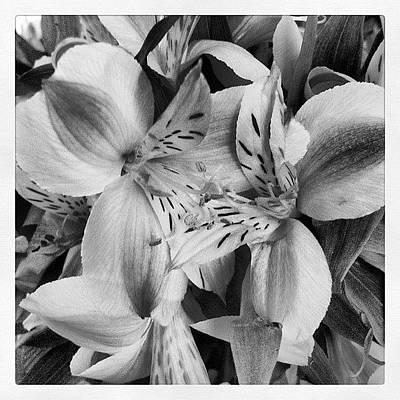 Bouquet Wall Art - Photograph - Virtue Alone by Susan McGurl