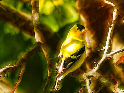 Visions Of A Male Goldfinch Print by Bill Tiepelman