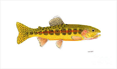 Salmon Painting - Volcano Creek Golden Trout by Thom Glace