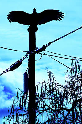 Photograph - Vulture On Phone Pole by Garry Gay