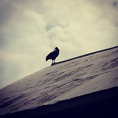 Photograph - Vulture by Rachael Sansing