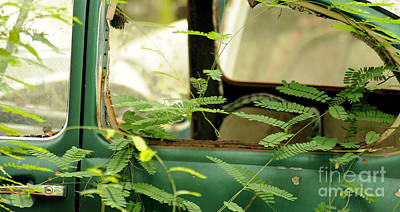Photograph - Vw Bug Going Green by Nancy Greenland