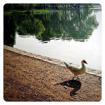 Birds Wall Art - Photograph - Waddle By The Water by Natasha Marco