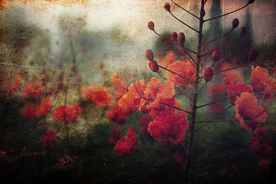 Blooming Digital Art - Waiting For Better Days by Laurie Search